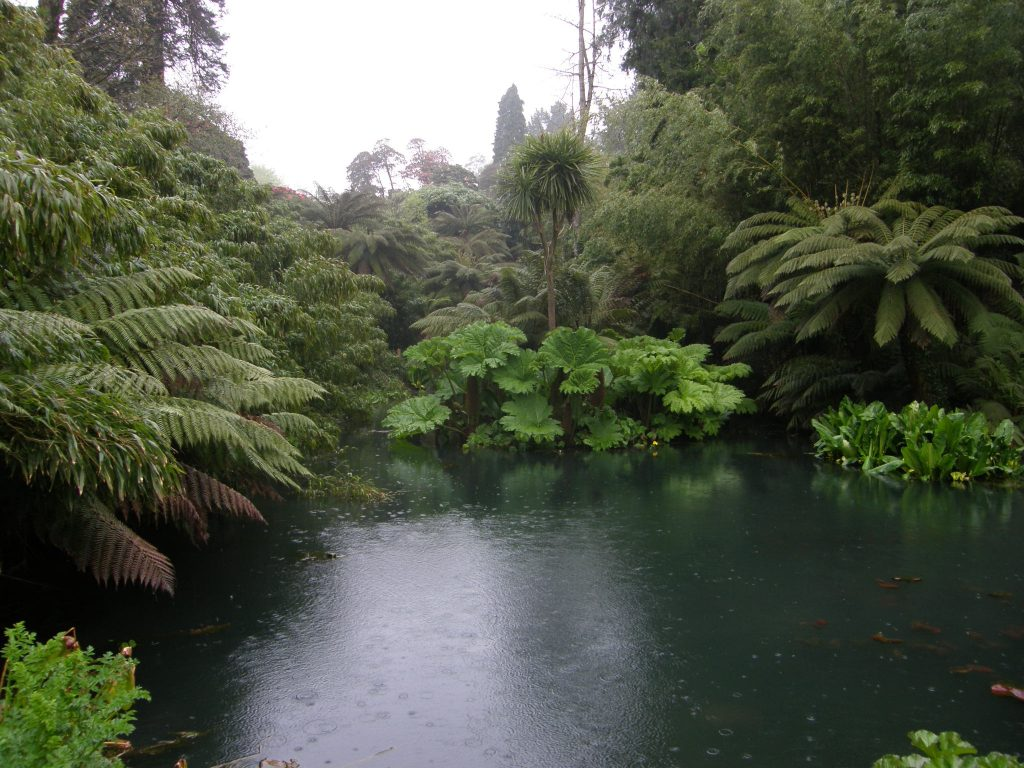 The Jungle at Heligan