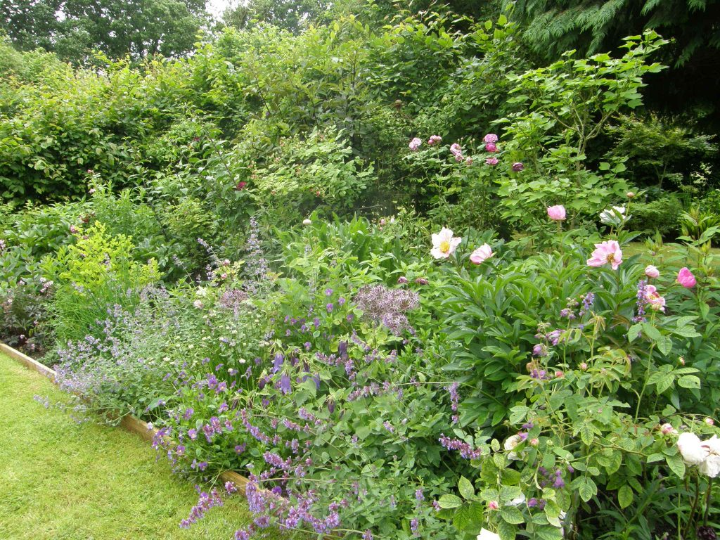 Rose border UK 20 June