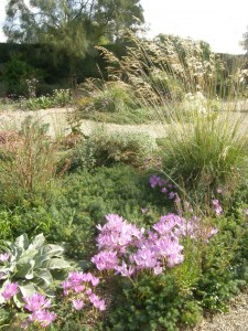 Beth Chatto Gravel Garden in late September