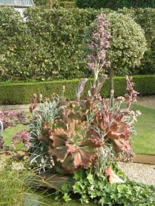 Huge succulent