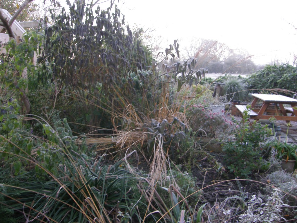 Frost hits tender plants 23/11/15 UK