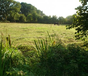 The dunking ground    lush vs grazed!