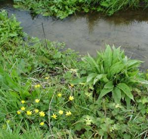 weeds-water
