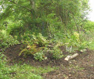 One part of the woodbed planted 2 weeks ago - work in progress